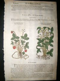 Gerards Herbal 1633 Hand Col Botanical Print. Strawberry, Fruit